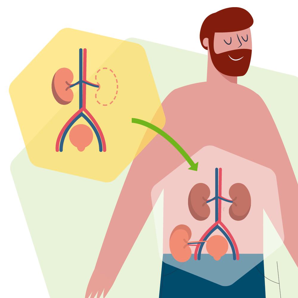 Transplant-Wissen > Infos fuer Spender > Organspender werden