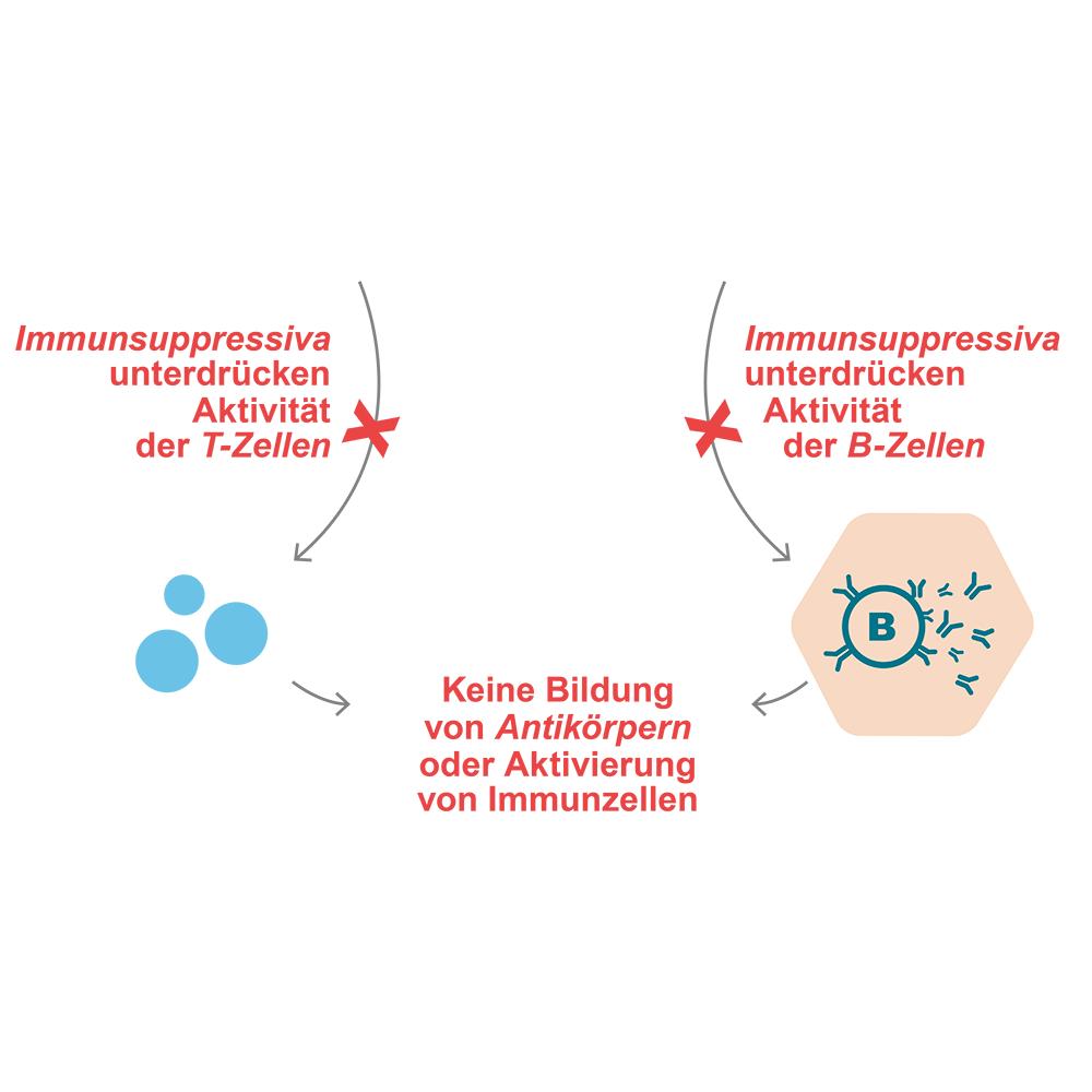 Transplant-Wissen > Medical > Wie funktioniert immunsuppressive Therapie