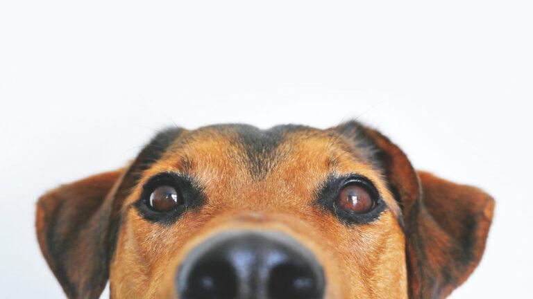 Transplant-Wissen > News > Hund guckt in die Kamera